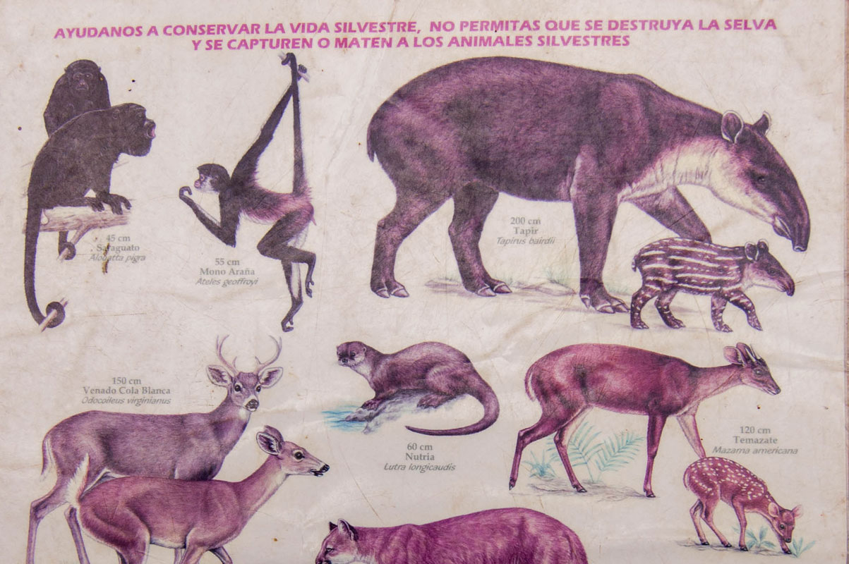 tours_chiapas_bonampak_yaxchilan_palenque_guias_en_chiapas_selva_lacandona_mayas_flora_y_fauna__chico_01