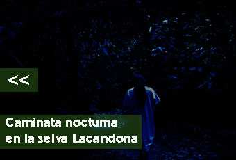 tours_chiapas_bonampak_yaxchilan_palenque_guias_en_chiapas_selva_lacandona_mayas_lacandones_caminata_nocturna_boton_izquierdo