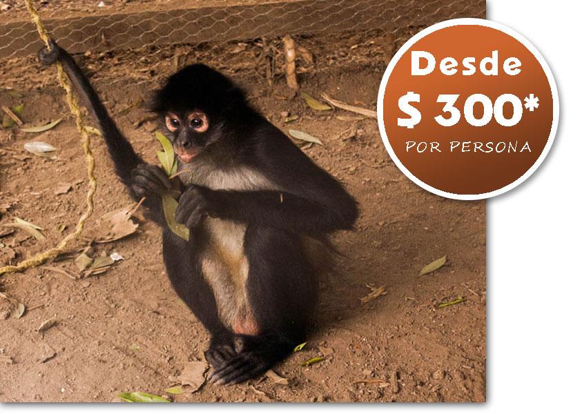 tours_chiapas_bonampak_yaxchilan_palenque_guias_en_chiapas_selva_lacandona_mayas_lacandones_ecoturismo_investigacion_de_flora_y_fauna_oferta