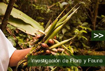 tours_chiapas_bonampak_yaxchilan_palenque_guias_en_chiapas_selva_lacandona_mayas_lacandones_investigacion_de_flora_y_fauna_boton