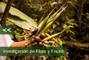 tours_chiapas_bonampak_yaxchilan_palenque_guias_en_chiapas_selva_lacandona_mayas_lacandones_investigacion_de_flora_y_fauna_boton_izquierdo