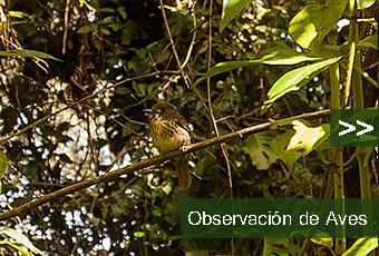 tours_chiapas_bonampak_yaxchilan_palenque_guias_en_chiapas_selva_lacandona_mayas_lacandones_observacion_de_aves_boton