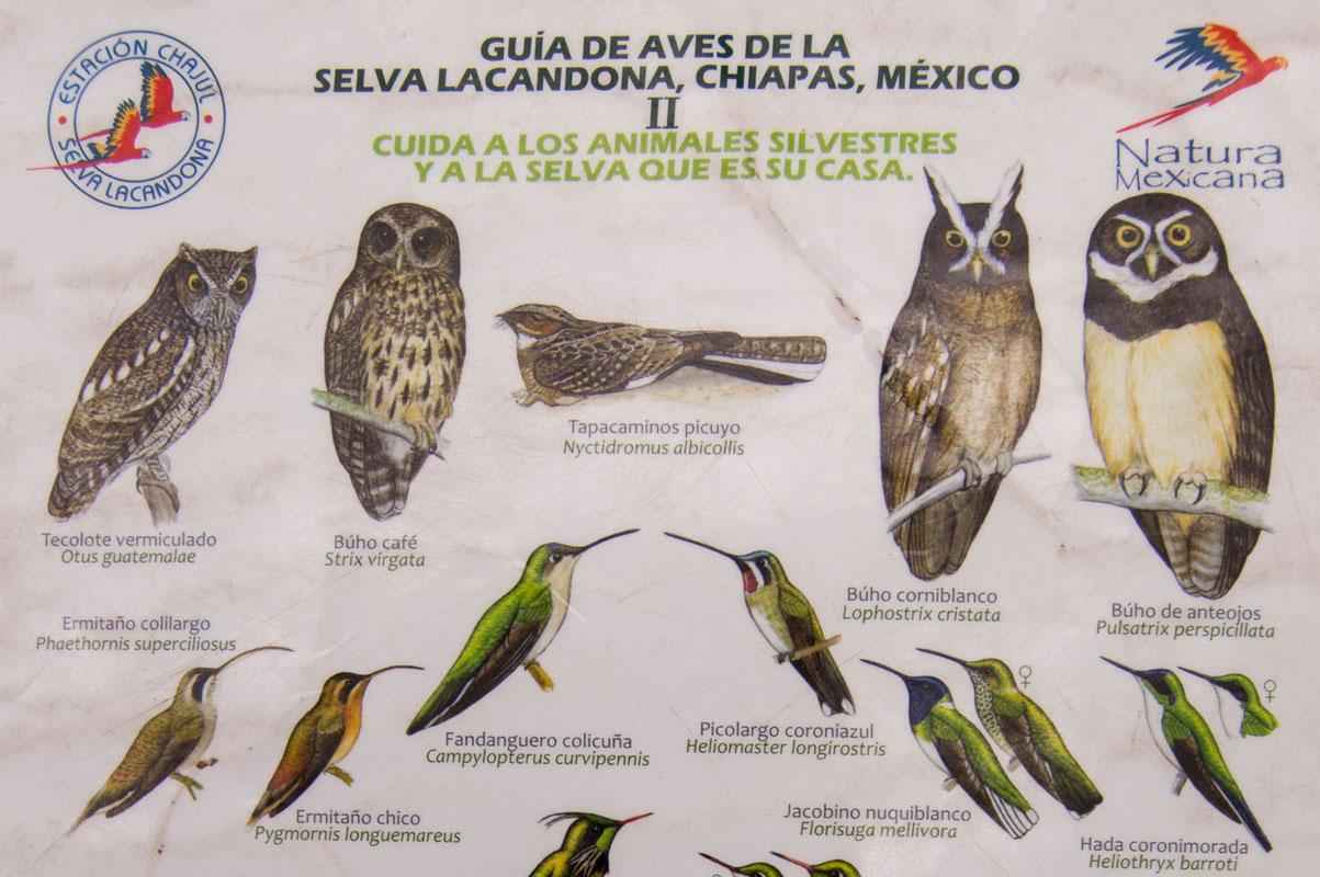 tours_chiapas_bonampak_yaxchilan_palenque_guias_en_chiapas_selva_lacandona_mayas_observacion_de_aves_chico_01