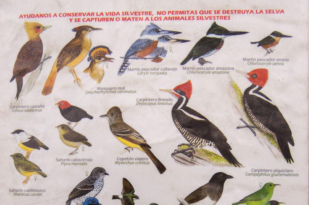 tours_chiapas_bonampak_yaxchilan_palenque_guias_en_chiapas_selva_lacandona_mayas_observacion_de_aves_chico_02