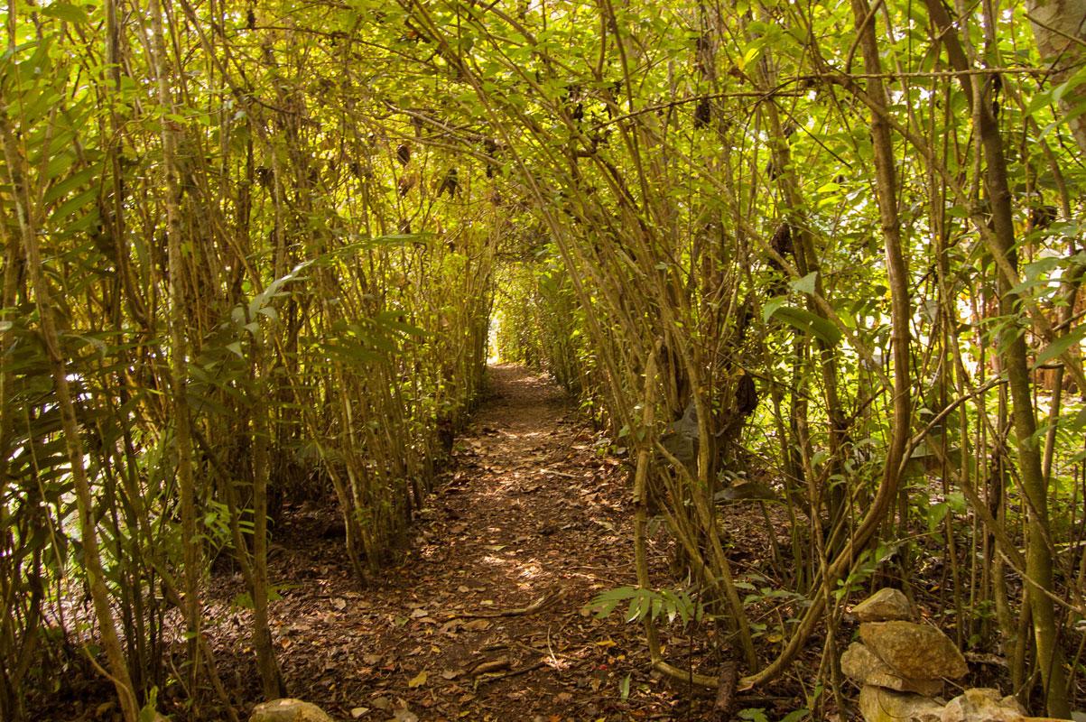 tours_en_chiapas_bonampak_yaxchilan_palenque_guias_en_chiapas_selva_lacandona_mayas_lacandones_aventura_caminatas_extremas_en_la_selva_lacandona_01