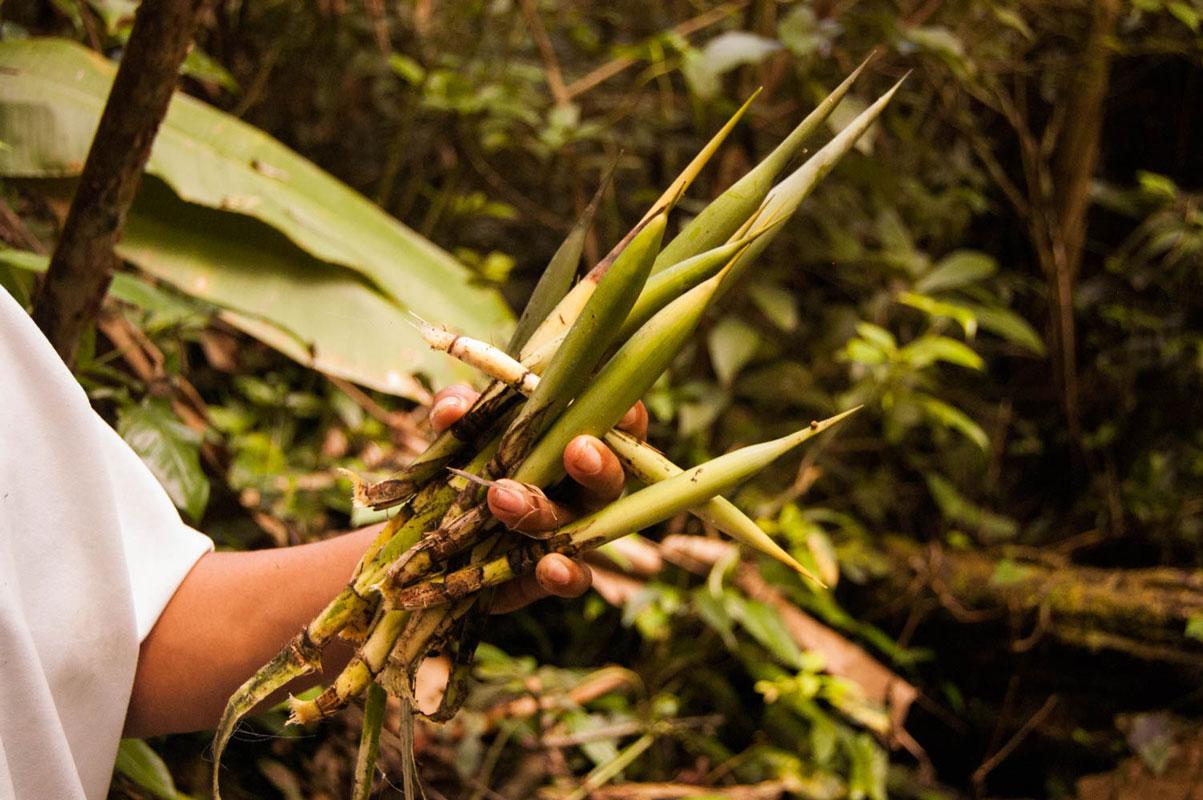 tours_en_chiapas_bonampak_yaxchilan_palenque_guias_en_chiapas_selva_lacandona_mayas_lacandones_ecoturismo_investigacion_de_flora_y_fauna_02