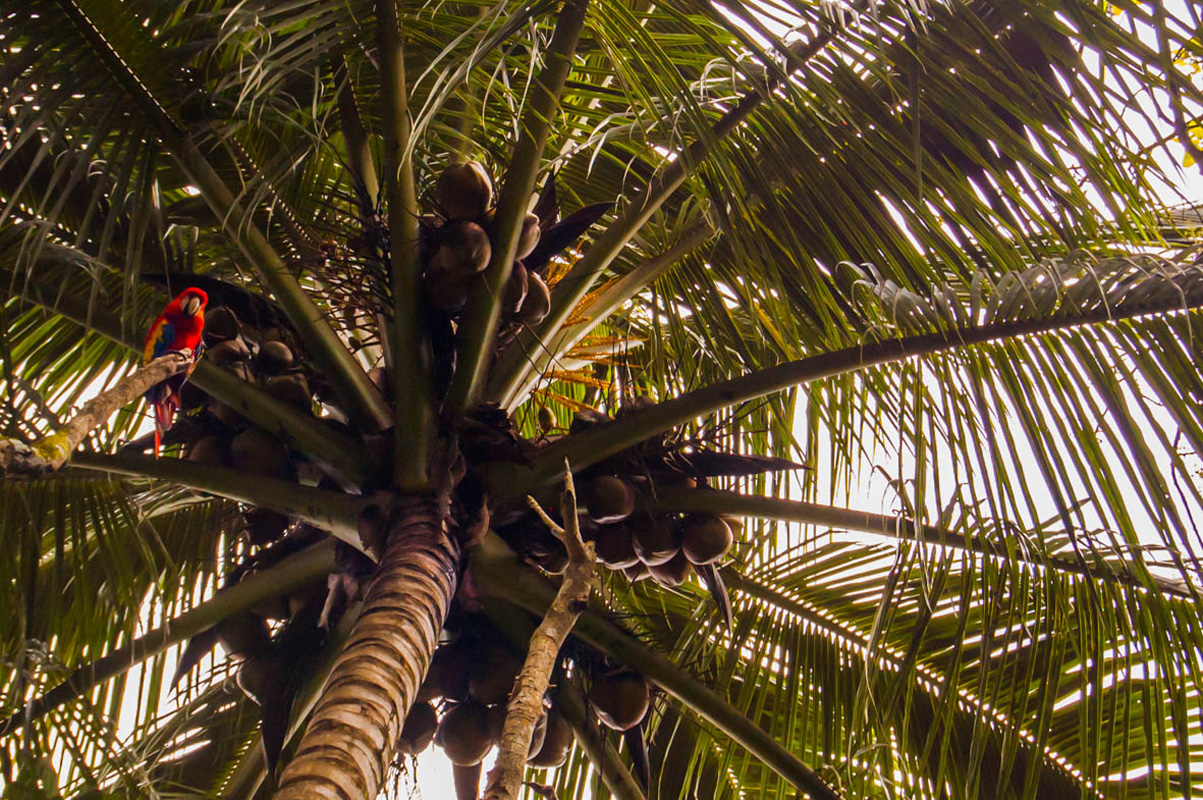 tours_en_chiapas_bonampak_yaxchilan_palenque_guias_en_chiapas_selva_lacandona_mayas_lacandones_ecoturismo_observacion_de_aves